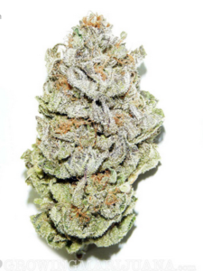 Super Silver Haze Cannabis Bud