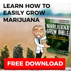 Cannabis Seeds UK Free Download Offer