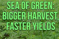 Sea Of Green Bigger Harvests
