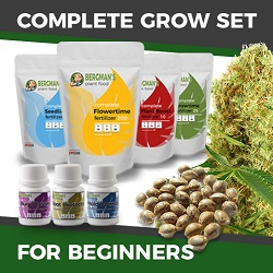 The Complete Cannabis Seed Grow Set For Beginners