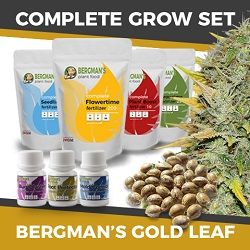 The Complete Gold Leaf Cannabis Seeds Grow Set