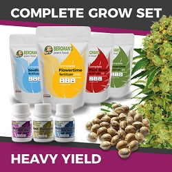 The Complete High Yield Cannabis Seeds Grow Set